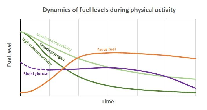 Fuel dynamics