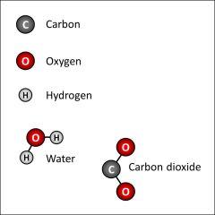 Carbon Oxygen Hydrogen